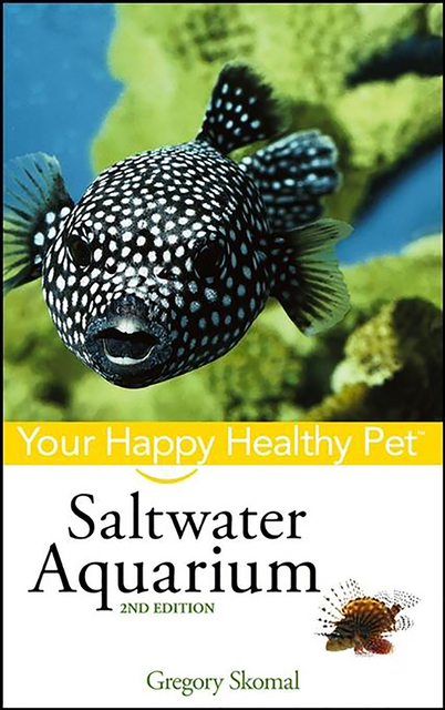 setting up and maintaining a saltwater