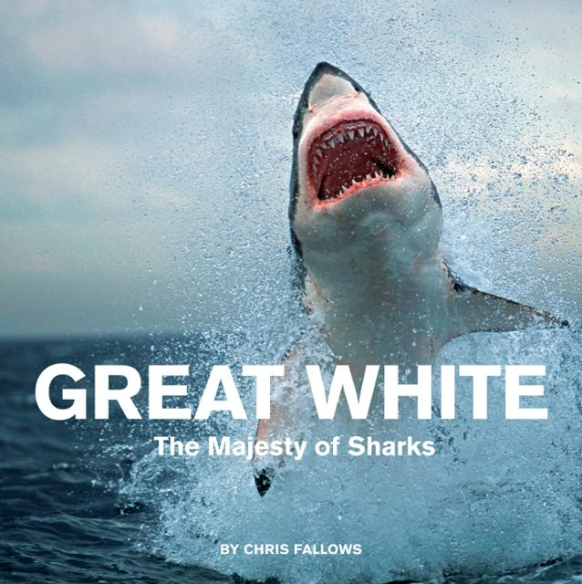 the great white shark essay Facts about great white sharks by alina bradford,  in contrast to most fish, which tend to be cold-blooded, the great white shark is warm-blooded,.